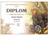 diplom_SYROVÍN_2011